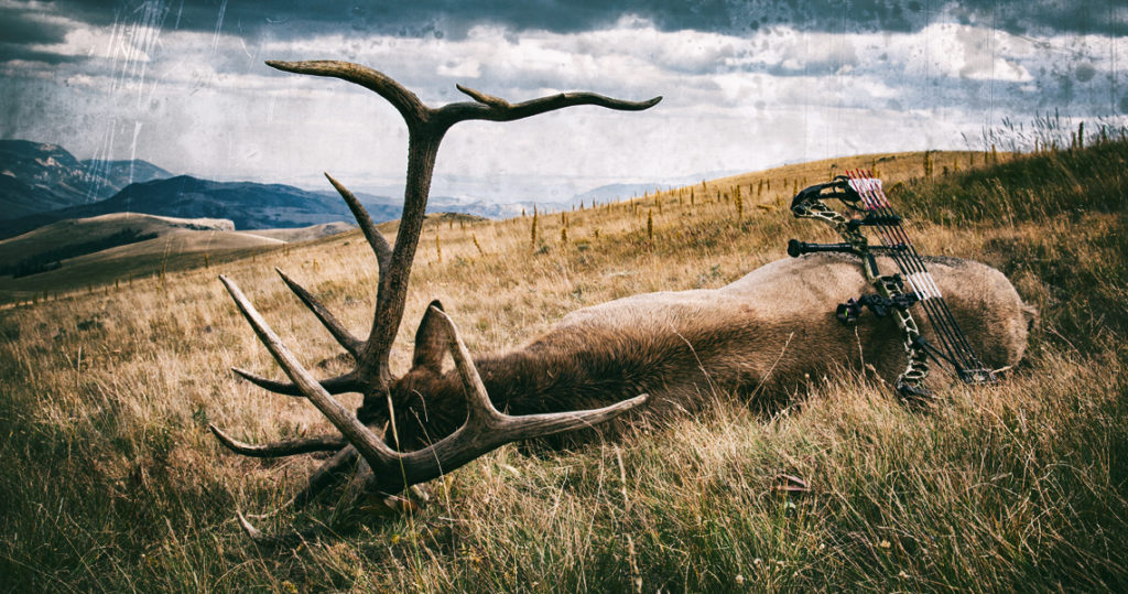 Best Dates for Bowhunting Trophy Elk