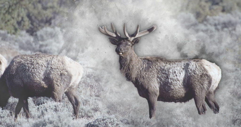 The Western U.S. Hunting Climate - Elk photo