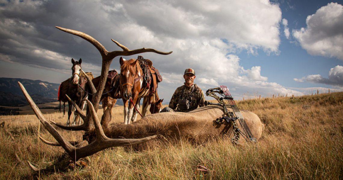 Stalking The Herd Bull 01